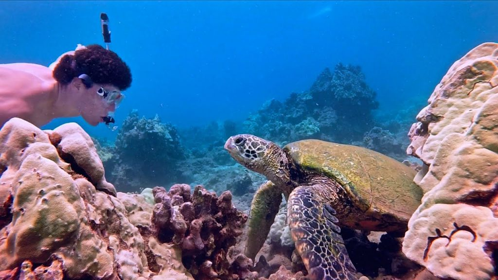 Maui activities swim with sea turtles